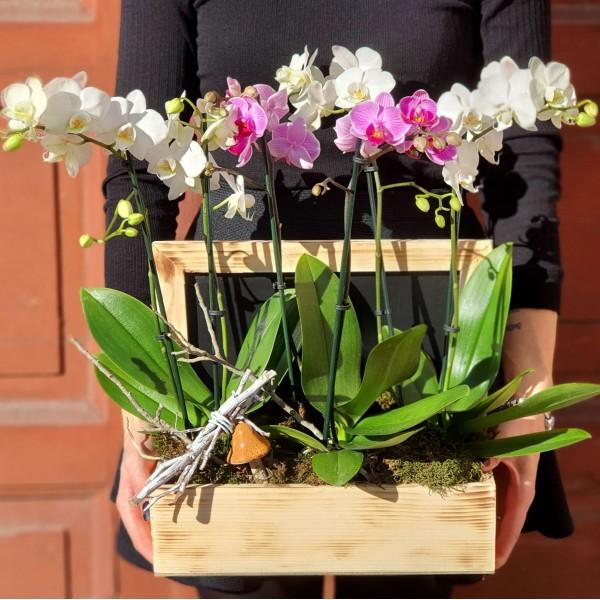 Aranjament cu trei orhidee