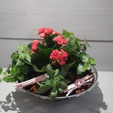 Aranjament plante