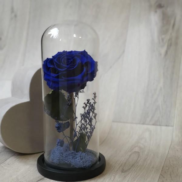Cupolă de sticlă cu trandafir stabilizat albastru