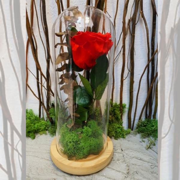 Cupolă de sticlă cu trandafir stabilizat roșu