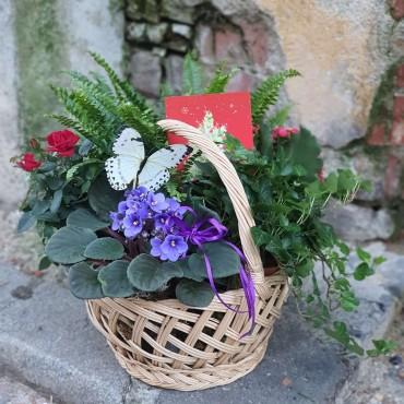 Aranajment cu plante în coș
