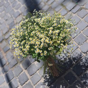 Buchet cu flori de mușețel